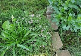 grass in flower beds