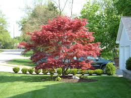 Small Picture Exterior Design Awesome Bloodgood Japanese Maple For Enchanting