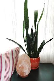 office plants no natural light. large size of bathroom designfabulous best plants for small house low light office no natural