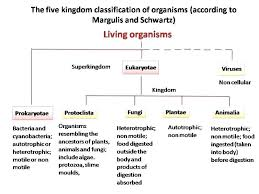 Kingdoms Of Biology Chart Animal Kingdom Classification Flow Chart Pdf September