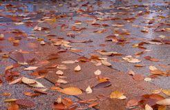 Resultado de imagen para calle de otoño