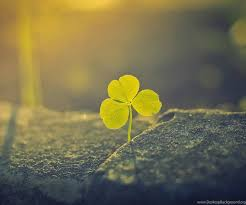 four leaf clover desktop wallpaper.  Four With Four Leaf Clover Desktop Wallpaper A