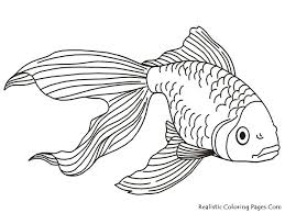 Small Picture Best 25 Fantail goldfish ideas on Pinterest Beautiful fish