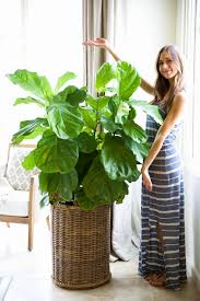 Excellent Coolest House Plants 45 About Remodel Apartment Interior  Designing with Coolest House Plants