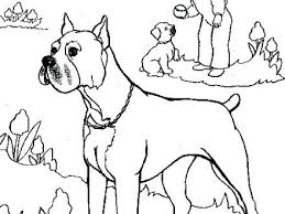 Boxer Dog Line Drawing At Getdrawingscom Free For Personal Use