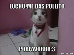 Sassy Cat Meme Generator - DIY LOL via Relatably.com