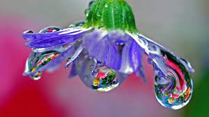 6 Water drops HD Wallpapers & Backgrounds