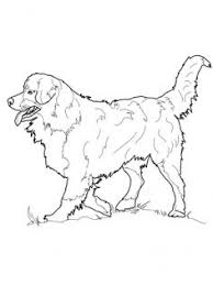 The 113 Best Favorite Dog Colouring Pages Images On Pinterest Dog