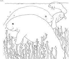 Small Picture Manatee Coloring Page Manatee Vs Dugong Side View Mother And