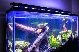 marine fish tank led lighting uk lilianduval