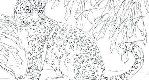 19 Luxury Snow Leopard Coloring Pages Coloring Page