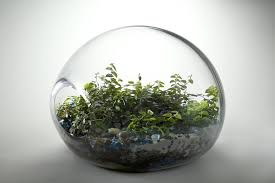 glass terrarium containers 12 picture inspiration outdoor
