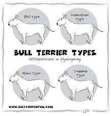 bully essay co bully essay