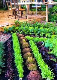 the garden patch grow box pretty beginner vegetable layout veggie