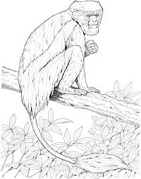 Small Picture colobus monkey coloring page Zoo activities Pinterest Monkey