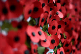 the poppy has bee synonymous with remembrance and memoration of the first world war armistice