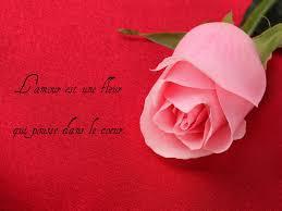 Poème Sur Fond De Roses Emploiaude