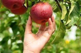 Fruitbomen kopen het adres voor