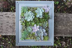 diy a framed succulent wall planter on live succulent wall art with diy a framed succulent wall planter do it yourself projects lonny