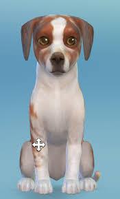 Adopt Dollie!   Sims 4, Sims, Animals