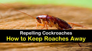 Repelling Cockroaches How To Keep Roaches Away