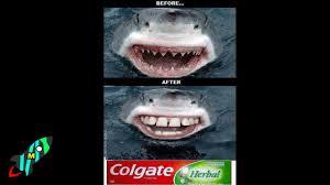 10 most funniest shark memes