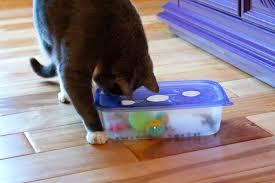 40 diy cat puzzle