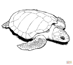 Small Picture Coloring Pages Animals Sea Turtle Coloring Page Printable