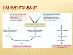 Pathophysiology Of Chf 22 Best Heart Failure Images On Pinterest Heart Failure Nursing