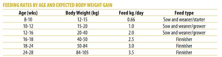 Pig Feeding Chart By Age Pdf How To Farm Pigs Feeding The Pig Site