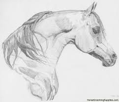 horse face drawing side. Beautiful Horse Arabian Horse Drawing Inside Face Side