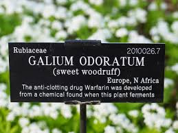 plant label from university of oxford s botanical garden showing all capitalized scientific name and no italics oxford university fair use link