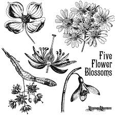 Vintage Illustrations Vector Art Antique Flower Blossom Illustrations Vintage Vectors