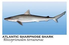 Meet 16 Sharks Found In Alabama Coastal Waters Al Com