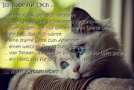 Zeljko Hanzek Katzen In Poreč Seite 16 Istrien Live Das