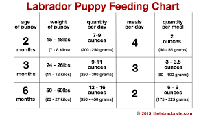 Puppy Eating Chart Feeding Your Labrador Puppy How Much Diet Charts And The