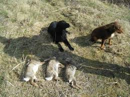 hunting rabbits it doesn t