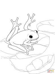 American Green Tree Frog Coloring Page