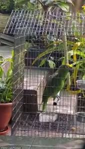 a parrot in the philippines was ed singing sia furler s chart
