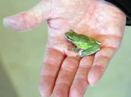 Frog invasion has homeowner a little freaked out
