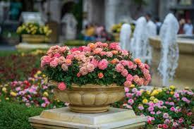 12 beautiful shrubs to grow in pots