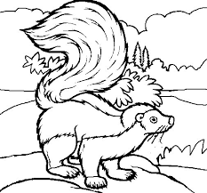 Small Picture Skunk coloring page Coloringcrewcom