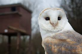 barn owl designs house plans beautiful box tips encourage