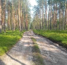 Отчёт по учебной практике Приехав на территорию Краснозатонского участкового Сыктывкарского лесничества мы ознакомились с просеками и квартальным столбом