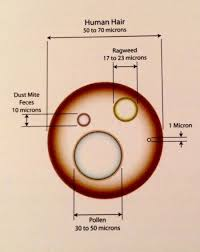 How Big Is A Micron Chart Particle Size Chart In Microns For Human Hair Ragweed