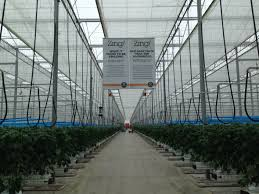 a look inside one of the newest greenhouses at orangeline farms in total the company operates thirteen hectares of greenhouses that s roughly the size of