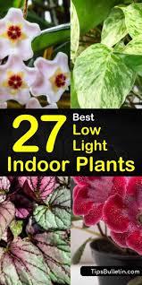 Low Light Indoor 27 Best Low Light Indoor Plants For Light Starved Rooms