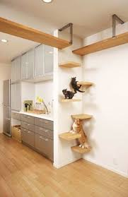 Floating Shelves For Cats Fascinating Cat Shelves Yes You Read That Right Plaster Disaster