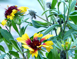 January flowers – No Idle hands here
