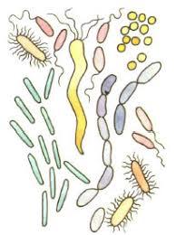 Бактерии Значение в природе и в жизни человека Разнообразие  Бактерии под увеличением